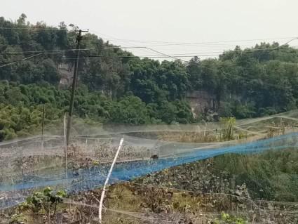 重庆璧山区66亩果园出租
