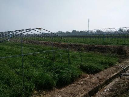 安徽  合肥 300亩 菜园 出租