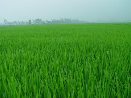 大安灌区500垧水田承包权转让