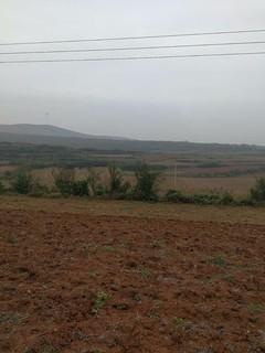 河南洛阳800亩经济林转让