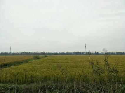 徐州铜山区500亩水田出租