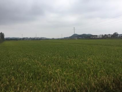 湘潭湘潭县600亩水田出租