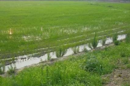 安徽合肥50亩水产养殖用地出租