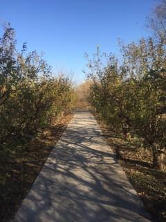 北京海淀区84亩果园转让