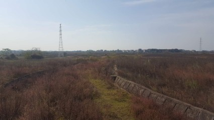 上饶鄱阳县320亩旱地出租