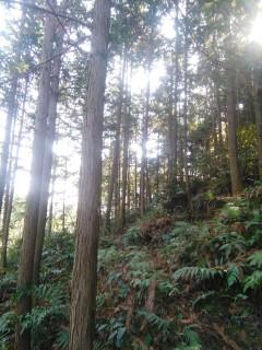 咸宁1000亩林地转让