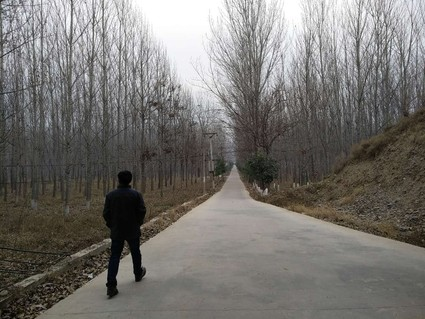 河南洛阳100亩有林地出租