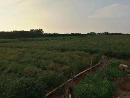 海南儋州280亩农家乐转让
