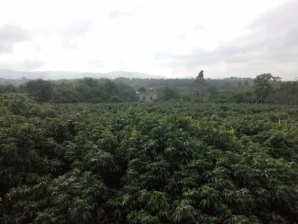 海南儋州40亩农家乐转让