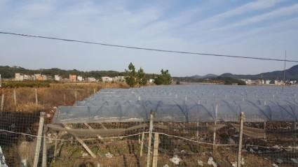 上饶鄱阳县30亩葡萄园转让