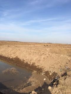 滨州高性价比6000亩高标准良田 水浇地 出租 低于市场价200元