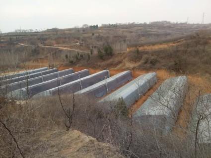 洛阳宜阳县20亩菜园出租