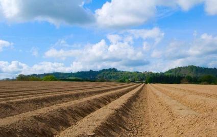 滨州  无棣县 4000亩 水浇地 出租