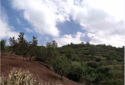 云南省昆明市富民县罗免镇73亩果林地 转让