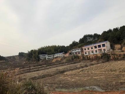 长沙宁乡县300亩水田及林地出租