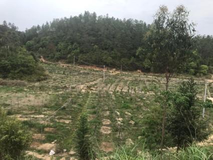广东河源200亩水田出租