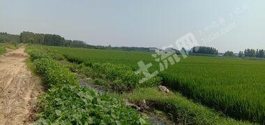 临沂河东区300亩水浇地转让