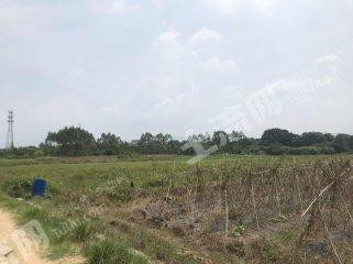 广东/惠州/惠东县130亩水田出租