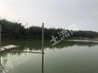 广东/惠州/惠东县100亩有林地出租