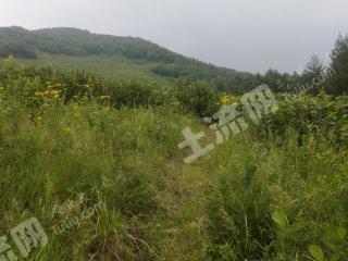 本溪本溪满族自治县123亩果园转让
