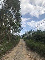 广东/惠州/惠东县45亩有林地转让