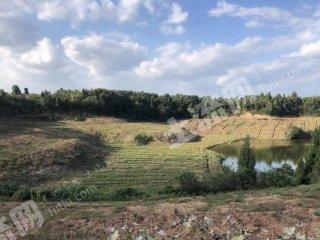德阳罗江县200亩果园转让