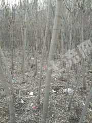 本溪本溪满族自治县58亩荒地转让