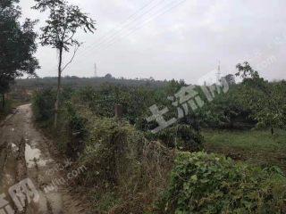渭南富平县26亩果园转让