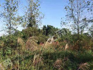 重庆渝北区120亩灌木林地转让