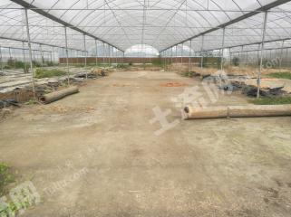 郫都区国道213旁600亩有机蔬菜种植园整体转让