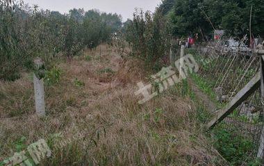 大邑县城郊45亩成熟李子园整体转让