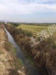 铜陵义安区1200亩水田出租