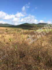 曲靖马龙区43亩水田出租,适合蔬菜种植