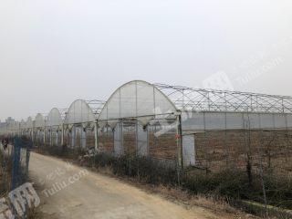 金堂赵家镇30余亩4.5米高大棚低价出租