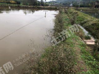 金堂土桥镇附近 100亩水产养殖地 转让