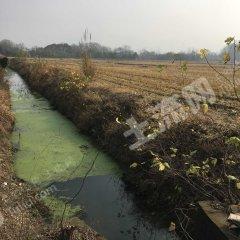 铜陵义安区1100亩水田出租