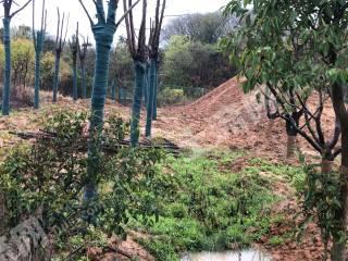 南京江宁区80亩农场转让