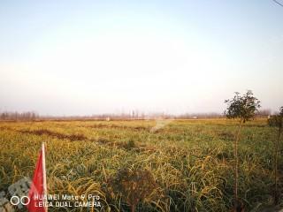 滁州  定遠縣 900畝 水產養殖用地 出租