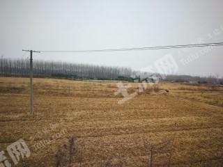 滁州  來安縣 1000畝 旱地 出租