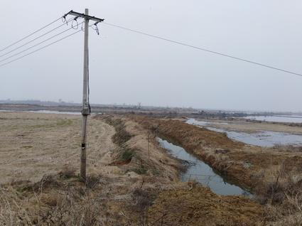 黄冈黄梅县387亩种芡实或养虾水田出租