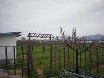 铜陵义安区47.46亩果园转包