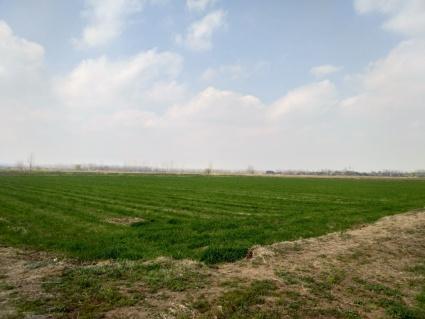来安县500亩水田出租 交通都是水泥路 水源好足够用 地块平整连片 随时可签合同