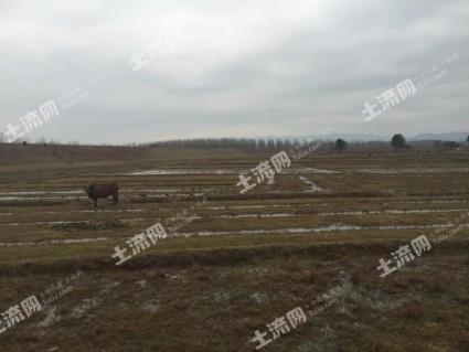 吉安吉安县 300亩 荒地 出租(JA8)