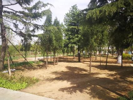 淄博临淄区150亩其它林地出租