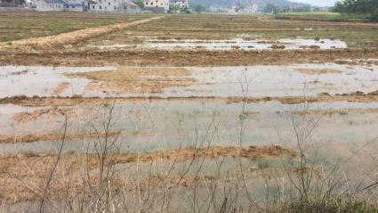 江西九江130亩优质水田出租