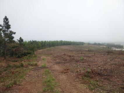 滁州南谯区有600亩林地(2个50亩左右的鱼塘)出租