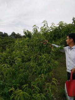 南阳  南召县 10亩 灌木林地 已转建设用地转让