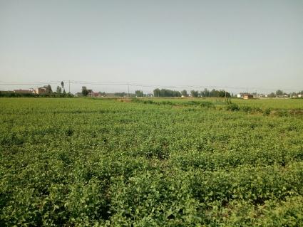 汉中城固县60亩果园转让