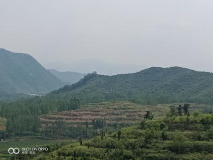 南阳  内乡县 100亩荒山——其中梯田整理40亩转让