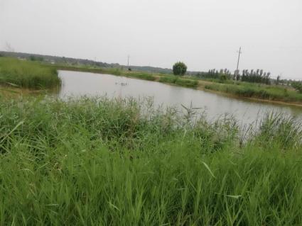 濮阳濮阳县180亩水产养殖用地出租